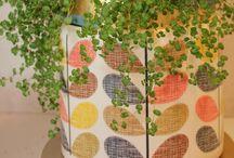 pot plants Auckland / pot plants auckland, Roses Florist can deliver  pot plants all over Auckland.