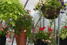 Mixed Outdoor Planters and Hanging Baskets