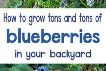 Growing fruits trees