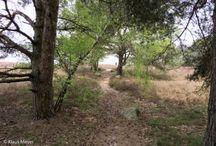 Heidegebiete