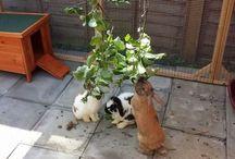 Kaniner ~ Bunnies