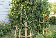 Landskapsarkitektur och trädgård