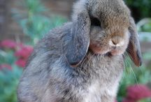 foto  coniglietto