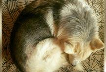 My. Husky.