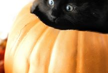 Fall Fun! / Fall weather brings lots of wonderful images into our lives: pumpkins, leaves, Halloween, and Thanksgiving. Our pets love sharing these moments with us!