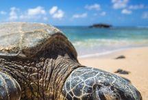 Turtle / Turtle's