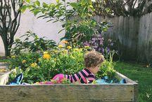 garden / by Stephanie Moore