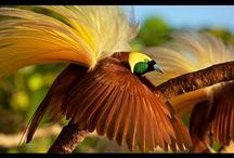 PAPUA NOVA GUINEA