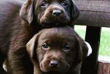 Собаки, щенята...