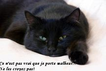 Les chats sont ... / Animaux