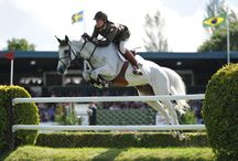 Horsey things to try this year / Get inspired with our suggestions for equestrian things to try during the next 12 months