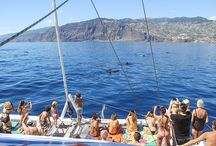 Boat Tours / Boat tours at Madeira Island... amazing experiences!