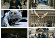Fantastic Beasts <3