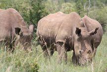 Amazing Pilanesberg Safaris