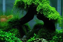Aquascaping nano