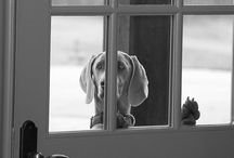 MORE THAN A DOG / A girl's best friend. / by Jennifer Williams