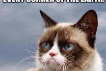 ~grumpy cat~