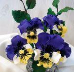 Květy postupy