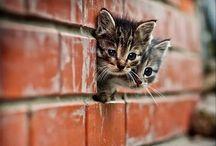 Kittens-Make Me Smile