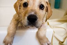 Anche i cani sono puliti
