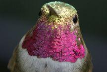 bird { photo }