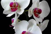 Orchids / by Garden Design