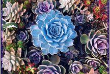 cactus / by arminda