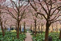Växter: träd och buskträd