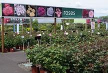 Roses & Displays