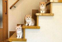 قِيطٌّ (si cat)