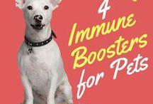 Dog natural health