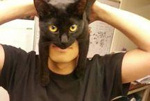 Cats josie