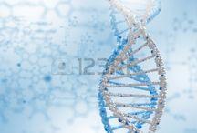 Cadena de ADN y genoma humano. / Imágenes con cadena de ADN y genoma humano.