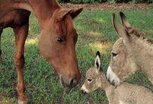 caballos / cuidado de caballos doma de caballos