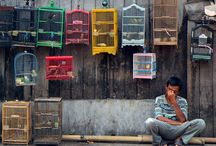 Hukum Memelihara Burung Kicau Dalam Pandangan Islam
