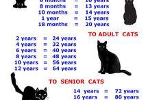 cat age charts