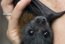 Bat board