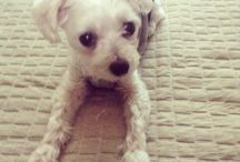 Dog / dog & cute