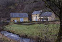 Le Gite du moulin de Marnay / Gite en Morvan: Faune, Flore du Morvan