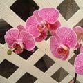 Garden - Orchids