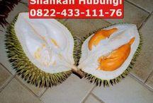 bibit durian bhineka bawor