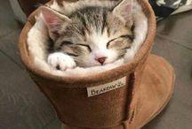 CATS ♥♡♥