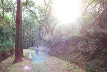 nara park with borzoi