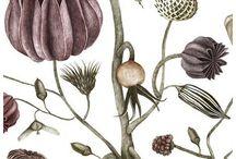 Botanical Inspiration / Love all things Botanical
