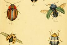 Porcelana owady