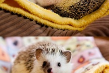 ~Hedgehogs only~