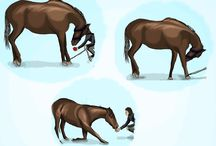 Equestrian - Tricks