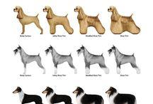 PET trim styles