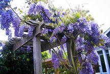Aromatic & Fragrant Plants