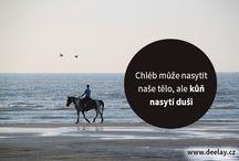 koňské citáty